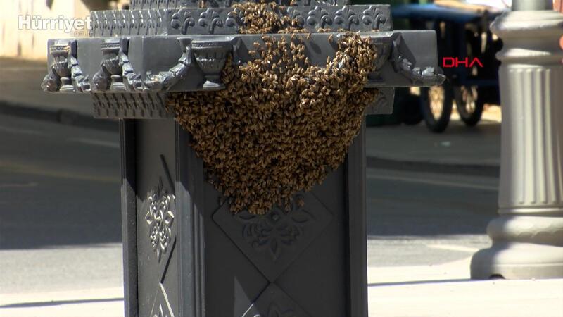 Saat direğine yuva yapan arıları itfaiye kovana aldı