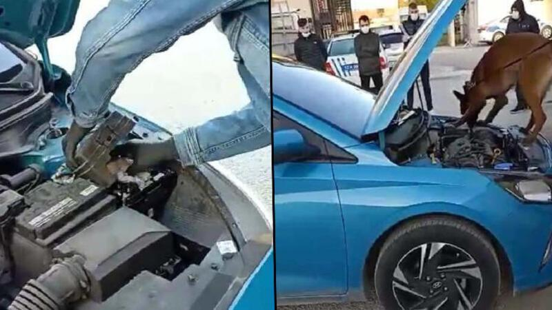 Çanakkale'de Otomobildeki 100 gram kokaini narkotik köpeği 'Lina' buldu
