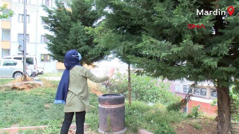13 yaşındaki Rümeysa'dan kaybolan muhabbet kuşunu bulana ödül