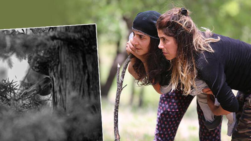 En zehirli türler arasında yer alıyor! Tunceli'de köyde görüldü