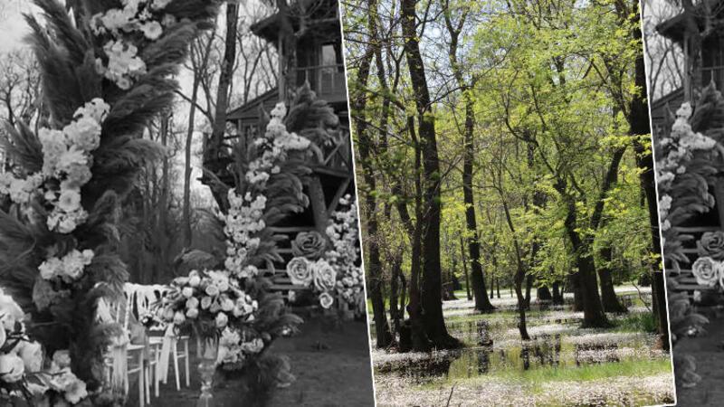 Samsun'da Galeriç Ormanı'nda tepki çeken görüntü!