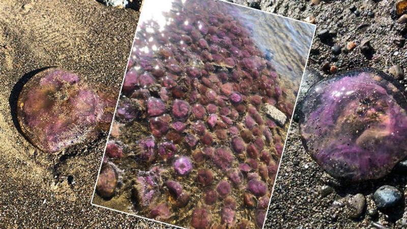 Karaağaç Sahili'nde tedirgin eden görüntü