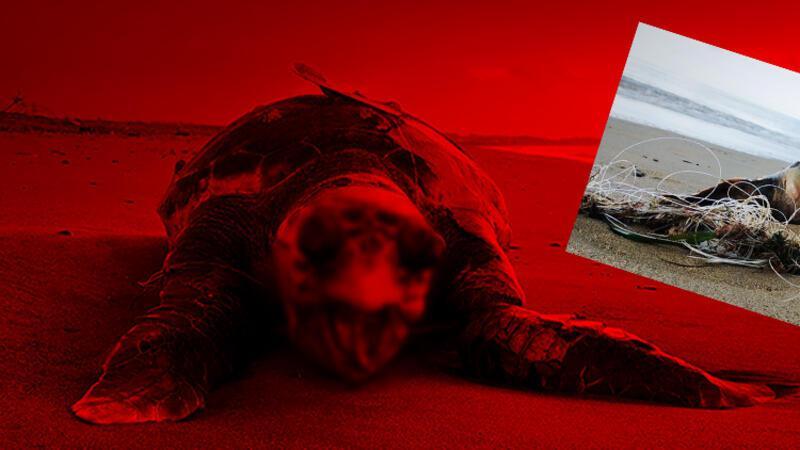 Kıyıya yakın ağlar, kaplumbağalara ölüm tuzağı
