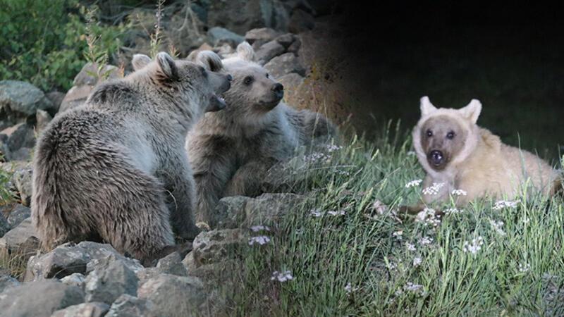 Nemrut Krater Gölü yakınlarındaki ayılarla ilgili uyarı