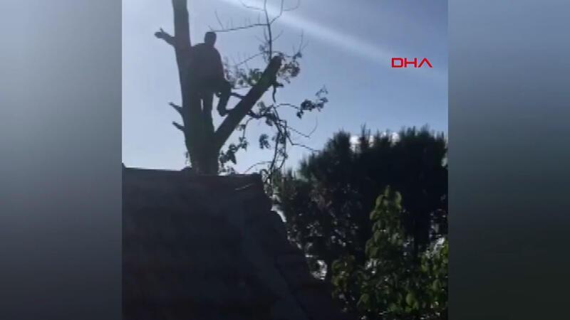 Budamak için çıktığı ağaçta mahsur kaldı
