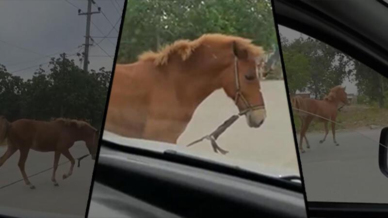 Başıboş at, trafiği altüst etti