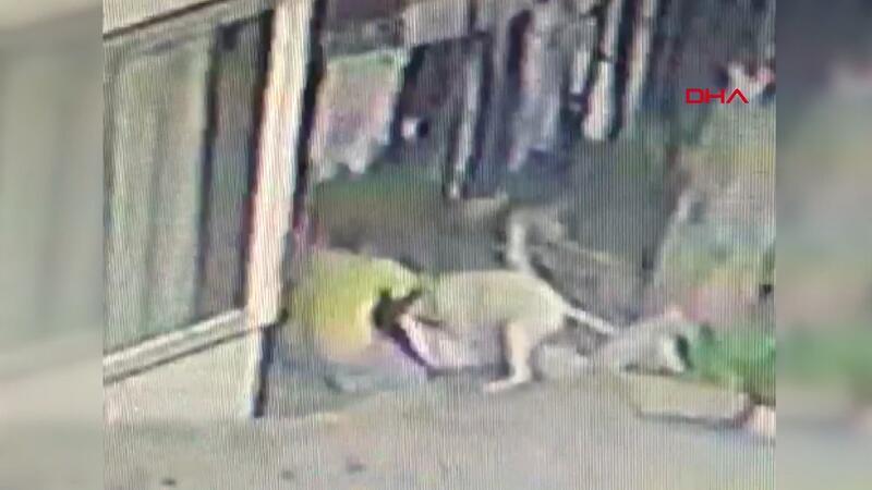 Başakşehir'de 16 yaşındaki Mine'ye 2 pitbull saldırdı