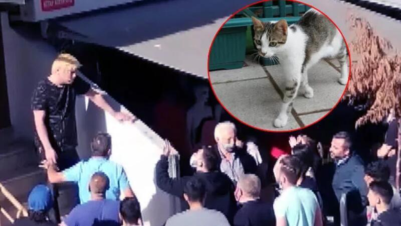 Kedi yediğini itiraf eden Japon vatandaşına mahalle sakinlerinden büyük tepki