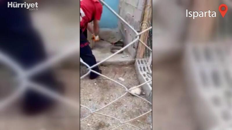 Köpek kulübesine giren yılanı itfaiye ekibi çıkardı