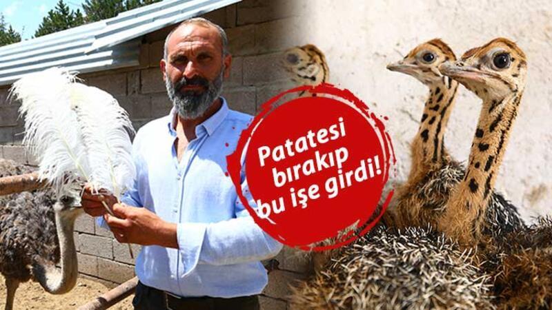 Patates üretimini bırakıp devekuşu çiftliği kurdu! Şimdi ihracata hazırlanıyor