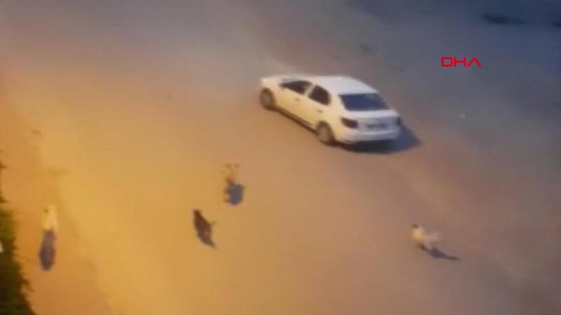 Yer Antalya... Köpekten korkan müzisyenler böyle kaçtı