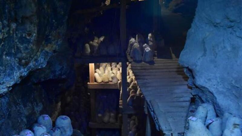Divle obruk peyniri, 36 metre derinliğindeki mağarada olgunlaşmayı bekliyor