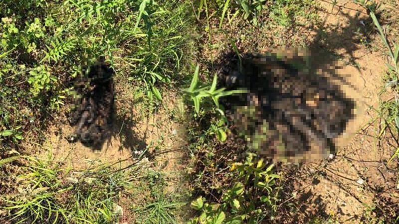 Sarıyer'de vahşet! Yavru köpeği diri diri yaktılar