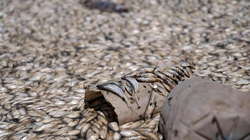 Konya'da May Barajı'nda sular çekildi, binlerce balık öldü