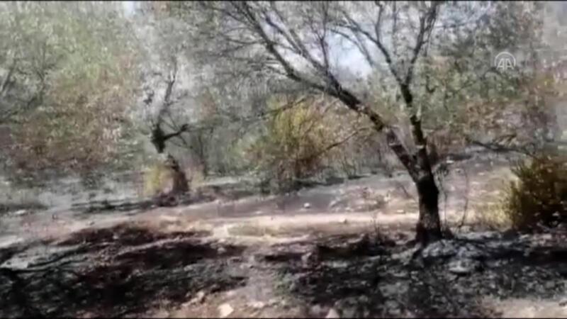 Datça'da çıkan yangında 10 dönüm zirai alan yandı