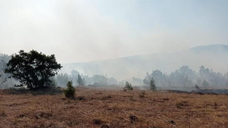Balıkesir Savaştepe'de orman yangını
