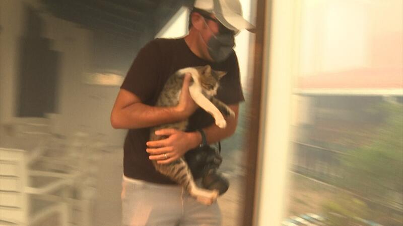 Milas'taki yangında evin balkonunda mahsur kalan kedi gazeteciler tarafından kurtarıldı