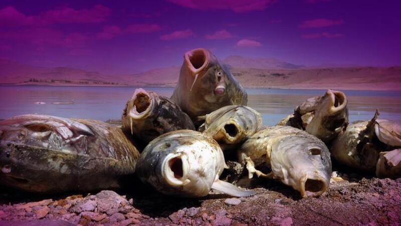 Van'ın Erciş ilçesindeki balık ölümlerinin nedeni belli oldu