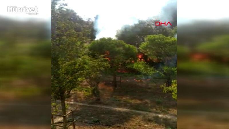 Altunizade'de ağaçlık alanda yangın