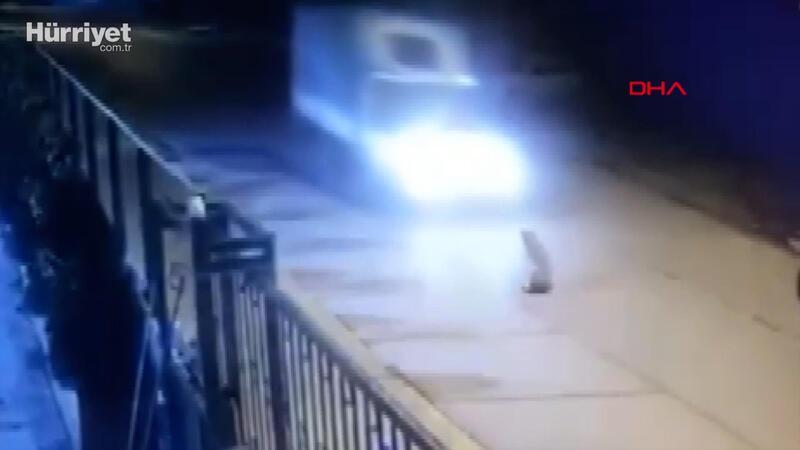 Tuzla'da kamyonetin ezdiği köpek öldü; sürücü durmayarak yoluna devam etti