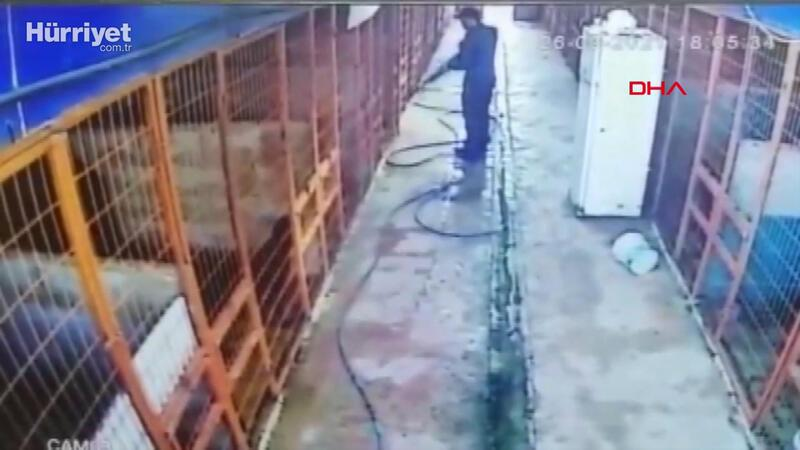 Tuzla'da köpeği av tüfeği ile vuran kişi kamerada
