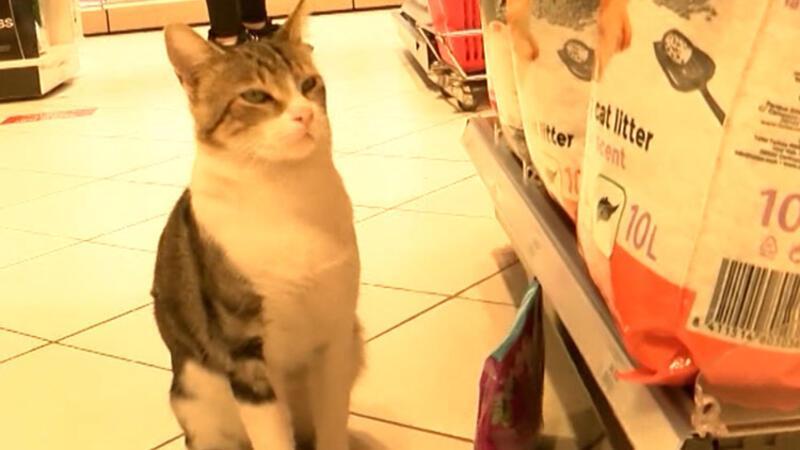 Kendisine zorla mama aldıran dilenci kedi 'Nokta'