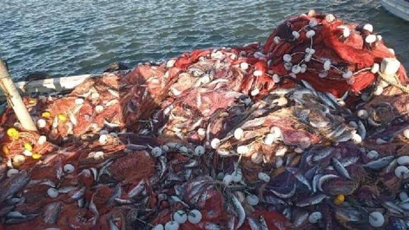Çanakkaleli balıkçı 15 bin tane lüfer yakaladı