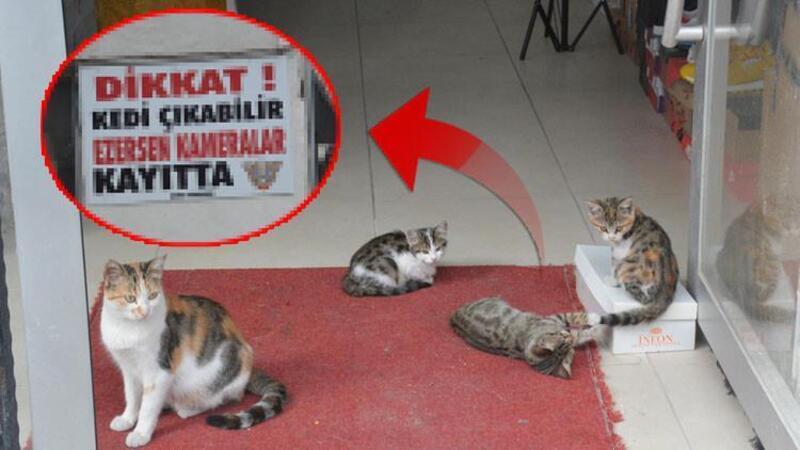Bilecik'te bir esnaf, beslediği 10 kedinin ezilmesi üzerine yazılı tabela astı