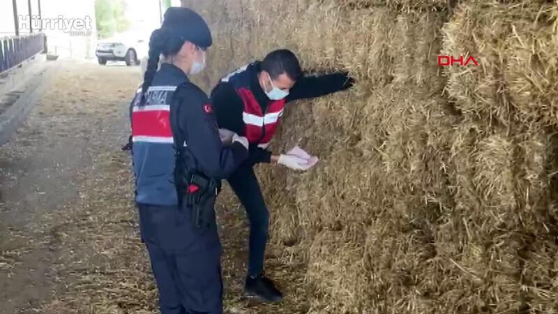 Jandarma, saman balyaları arasına saklanan para ve çekleri buldu