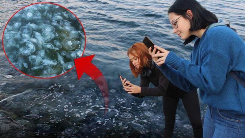 Gölcük'te sahil denizanasıyla kaplandı