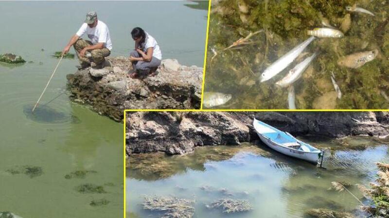 Göllerde 'çürüme' felaketi! Tehlike ciddi boyutlara ulaştı