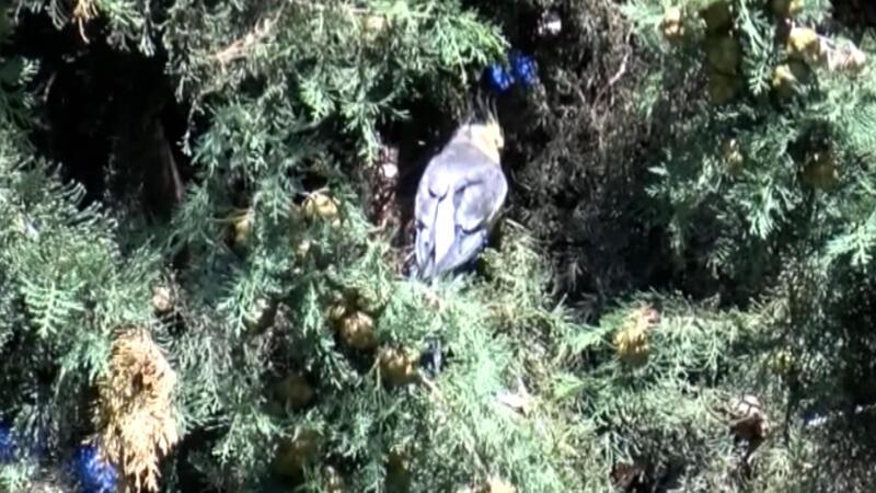 Sultan papağanı evden kaçtı; itfaiye ve aile yakalamak için seferber oldu