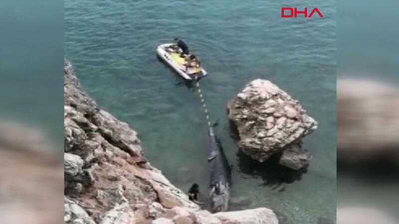 Yalancı katil balina ölüsü kıyıya vurdu